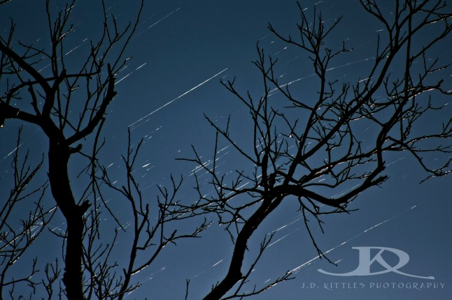 Photo of dormant pecan tree, with gossamer streamers courtesy of the webslingers, taken by J.D. Kittles Photography and used with permission