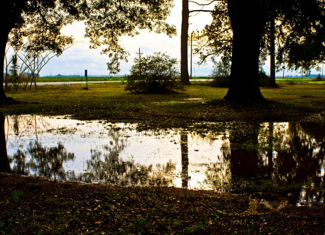 Calm puddle reflections photo by J.D. Kittles Photography ~ used with permission