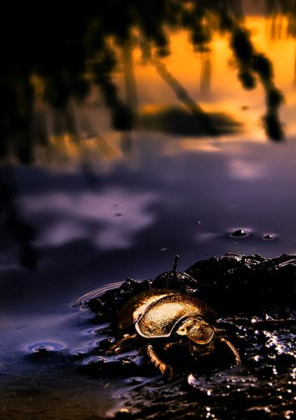 Golden Hour (2)