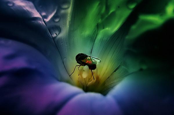 Life inside a Flower  (13)